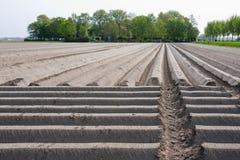 Terres cultivables nues hollandaises au printemps Photographie stock