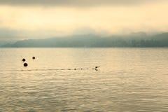 Terres de canard sur le wörthersee de lac dans le lever de soleil images libres de droits