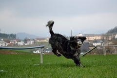 Terres de chien après saut Images libres de droits