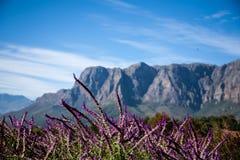 Terres de vin de cap Photo libre de droits