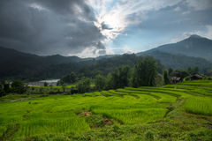 Terrest米领域在清迈,泰国 图库摄影