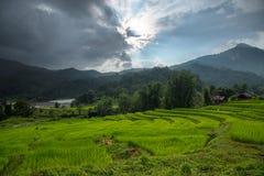 Terrest risfält i Chiang Mai, Thailand Arkivbild