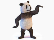 Terrestrial animal panda bear native central China  recognized by large distinctive black patches around eyes over ears across rou Stock Photo