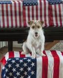 Terriër met vlaggen voor 4 Juli Royalty-vrije Stock Afbeeldingen