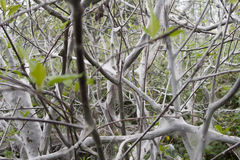Terrible awful moth kills trees, spins a web Royalty Free Stock Image