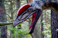 A terrible dinosaur in the forest. Terrible dinosaur in a pine forest. Behind the tree is a dinosaur head with a red plume, sharp teeth and a red throat. Gray Stock Image