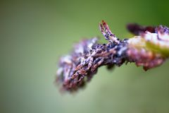 Terrible diseased parts of the plant closeup. Wilting and diseases in plants. macro shot with a large zoom stock images