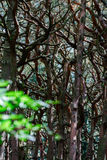 Terrible dreamy mysterious forest view Royalty Free Stock Images