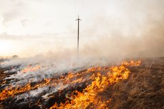 A terrible fire destroys the field. the flame burns the spring grass. security measures and prevent burning. A terrible fire destroys the field. the flame burns Stock Images