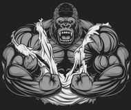 Terrible gorilla athlete Stock Photo
