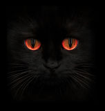 Terrible muzzle of a black cat with red eyes. Closeup stock photos