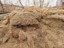 Terrible smell grass. Decay harvested grass in big green mound in corner of garden. Terrible smell rotten grass. Decay harvested grass in big green mound in Royalty Free Stock Photo