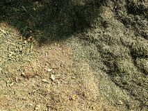 Terrible smell rotten grass. Decay harvested grass in green mound in garden. Stock Photography