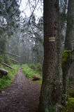 Terrible trail in the woods Royalty Free Stock Photos