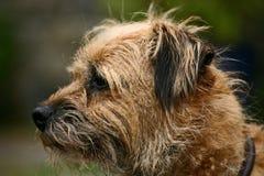 terrier граници Стоковые Фотографии RF