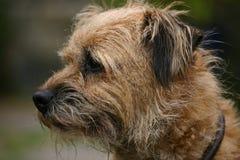 terrier граници Стоковые Изображения RF