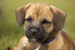 terrier граници Стоковое фото RF