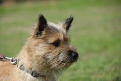terrier пирамиды из камней Стоковые Фотографии RF