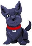 terrier самого лучшего чемпиона breed шотландский Стоковые Фотографии RF