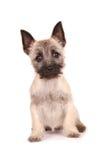 terrier щенка пирамиды из камней Стоковые Изображения