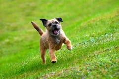 terrier английской языка граници Стоковая Фотография RF