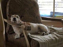 terrier Стоковые Фото