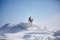 Terrier ativo e bonito de Russel do jaque da raça do cão fora Fotografia de Stock