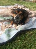 Terrier auf einer Decke Lizenzfreie Stockfotografie
