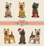 Terrier Collection Royalty Free Stock Photos