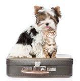 Terrier de Biewer-Yorkshire et chat du Bengale se reposant sur un sac D'isolement Photo libre de droits