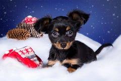 Terrier de brinquedo do cachorrinho que encontra-se na neve Imagem de Stock