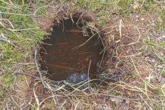 Terrier de castor sur le lac de forêt Photographie stock libre de droits