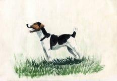 Terrier de Fox, raça ilustração royalty free