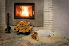 Terrier de Gato Russel Imagen de archivo