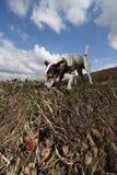 Terrier de Gato Russel en el campo Imagenes de archivo