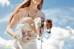 Terrier de Jack Russell Imagem de Stock