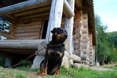 Terrier de Jagd del perro Imagenes de archivo