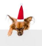 Terrier de juguete ruso en sombrero rojo de la Navidad sobre la bandera blanca que mira abajo En el fondo blanco Foto de archivo libre de regalías