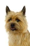Terrier de mojón Foto de archivo