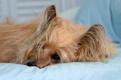 Terrier de mojón Fotografía de archivo libre de regalías