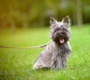 Terrier de mojón en un paseo imagen de archivo libre de regalías
