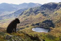 Terrier de Patterdale cénico Fotografia de Stock Royalty Free