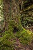 Terrier de souche d'arbre Photographie stock libre de droits