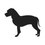 Terrier de Staffordshire americano Stock de ilustración