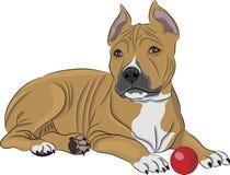 Terrier de Staffordshire americano do vetor Fotografia de Stock