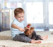 Terrier de Yorkshire bonito do cão de animal de estimação da alimentação de crianças Fotografia de Stock Royalty Free