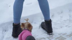 Terrier de Yorkshire en paseos del suéter cerca del dueño que mira para arriba La señora toma el animal doméstico en manos Un ado almacen de video