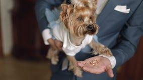 Terrier del cane in vestito divertente stock footage