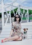 Terrier del Jack Russell Fotografie Stock