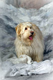 Terrier del mestizo Foto de archivo
